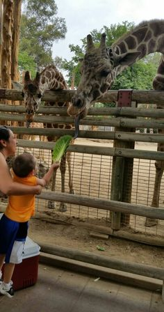 Tanner at the zoo
