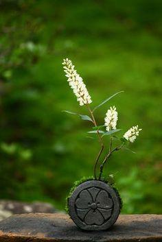 moss ball bonsai …could be ikebana Deco Floral, Arte Floral, Ikebana Arrangements, Flower Arrangements, Art Floral Japonais, Sogetsu Ikebana, Plantas Bonsai, Mini Bonsai, Miniature Trees