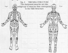 Figure 3 Will Structure bodynamic Body Therapy, Abstract, Summary