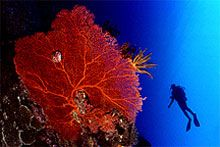 Fiji - soft coral capital of the world.