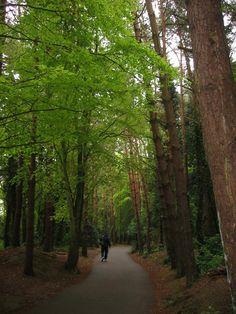 Forest Path, Malahide, Co. Dublin, Ireland