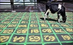Cow Patty Bingo...where ever the cows poops is the number you mark on your Bingo card!