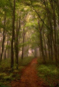 Fonds d'écran Nature > Fonds d'écran Arbres - Forêts Brouillard du matin par djgorgo - Hebus.com