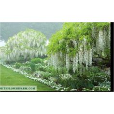 Moon garden white flower farm Night Garden, Moon Garden, Garden Pool, Garden Trees, Water Garden, Lawn And Garden, White Flower Farm, White Flowers, Weeping Trees