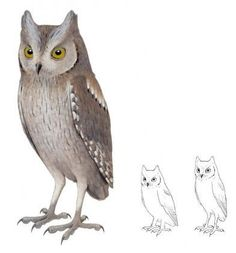 Extinct species of Scops Owl discovered in Madeira