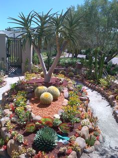 Maybe I could have barrel cactus if I put them in a raised garden so the dog wouldn't go near them.