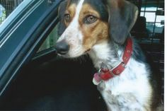 Anna (Now Annie) Update:  Very happily adopted!!! Happy 3 year adoption anniversary!!! :)