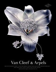 Jewerly Display Luxury Van Cleef Arpels Ideas For 2019 Jewellery Advertising, Jewelry Ads, Photo Jewelry, Jewelry Branding, Jewelry Trends, Jewelry Design, Fashion Jewelry, Jewelry Shop, Jewelry Making