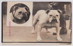 Bulldog 1900 colección C.H.
