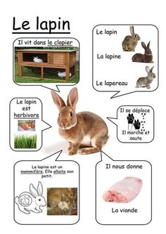 Printable page about le lapin Core French, French Class, French Lessons, French Teacher, Teaching French, How To Speak French, Learn French, Farm Animals, Animals And Pets