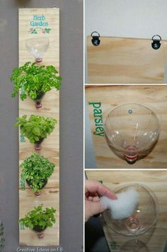 Hanging garden from 2-litter coke bottles, perfect for herbs and small/shallow rooted plants