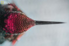 A hummingbird's iridescent feathers. | 15 Absolutely Breathtaking Nature Photos