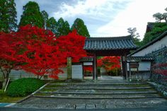 https://flic.kr/p/Pigj3b | Shūon-an Ikkyū-ji, Autumn Buzz in Kyotanabe, Japan. | The famous Sōmon gate (総門) of the Shūon-an Ikkyū-ji (酬恩庵一休寺) in Kyotanabe today. The autumn colors are slowly coming in full color.