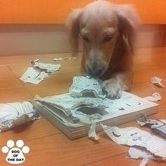 DOG OF THE DAY  Jul.10,2012 @duffylove