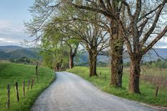 Trees on a Path Art Print by Jon Glaser. All prints are professionally printed, packaged, and shipped within 3 - 4 business days. Fine Art Photography, Park Photography, Mountain Photography, Amazing Photography, Travel Photography, Thing 1, Cades Cove, Art Prints For Sale