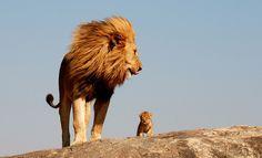 Simba and Mufasa?