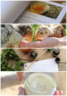 40+ recipe to help you create a more natural homestead: fly spray recipes, chicken feed formulas, natural supplement tips, garden spray recipes, and tons more! (Available in both Kindle AND print versions!)