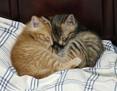 我が家の猫たちの画像 | 楽しい写真のフォト スタジオ フラッグ