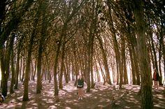 the enchanted forest, miramar, argentina-photo by mkaz
