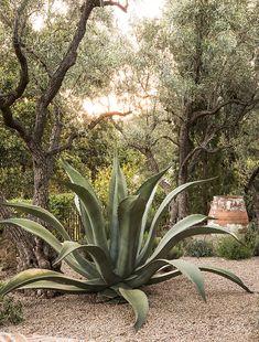landscaping – Gardening Ideas, Tips & Techniques Spanish Garden, Mediterranean Garden, Outdoor Landscaping, Outdoor Gardens, California Backyard, Paludarium, Shade Trees, Garden Fountains, Balcony Garden