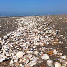 Line of shells.