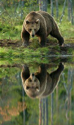 Enjoying His Reflection!