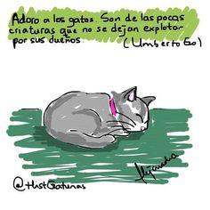 Adoro a los gatos... (Frase de #umbertoeco  filósofo y escritor italiano que falleció hoy 19 de febrero de 2016. QEPD ). by histcotidianas