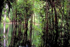 Amazon rainforest    The Amazon rainforest is a vast territory and represents the world's largest tropical forest. Its 62 villages are mostrly spread through river banks. Travelers have a number of options such as canoing, piranha fishing, visiting indian tribes and local homes and so on.