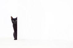 Black cat, huge green eyes, looking around corner, all white background (B&W photo)