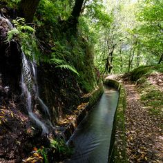 Ancient Canal, Madeira, Portugal    This is what we call a Levada