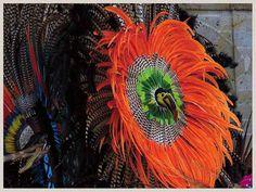 Toucan, Plumage & Colors