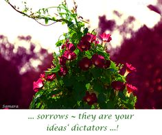 ... #sorrows ~ they are your #ideas' #dictators ...!