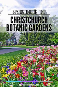 Springtime in the Christchurch Botanic Gardens - The Trusted Traveller