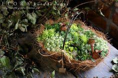 Flora of gardening, horticulture work diary - succulent planting sedum