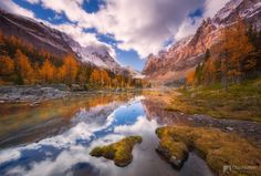 Opabin Larch Reflections by Chip Phillips