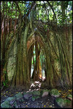 Tree  Church Roots