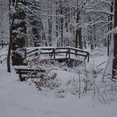 Winter 2010,Bos van over Holland
