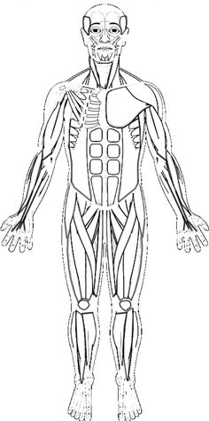 Shows a sketch of a human with the major muscle groups, students are tasked with identifying the muscles and coloring them according to the directions. Leg Muscles Diagram, Muscle Diagram, Lower Leg Muscles, Muscles Of The Face, Types Of Muscles, Major Muscles, Hulk Coloring Pages, Coloring Books, Free Coloring