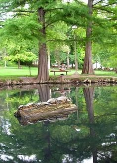 BYU Duck Pond