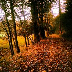 #Altovergante #magic #fall #running #trail #lagomaggiore