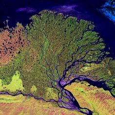 Lena Delta  Image taken 7/27/2000: The Lena River, some 2,800 miles (4,400 km) long, is one of the largest rivers in the world. The Lena Delta Reserve is the most extensive protected wilderness area in Russia. It is an important refuge and breeding grounds for many species of Siberian wildlife.    The Lena Delta can be found on Landsat 7 WRS Path 131 Row 8/9, center: 72.21, 126.15.    To learn more about the Landsat satellite go to:    landsat.gsfc.nasa.gov/