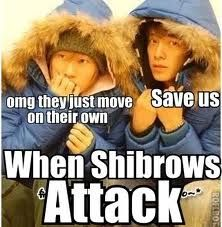 The attack of the Shibrows! lol