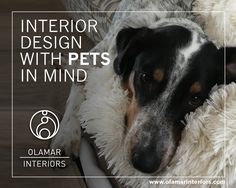 If you are anything like me, your pets live on the furniture and throughout your home as much and as well as the human family members do. Here are a few of the things I consider when my clients ask me to design with their four-legged family members in mind.