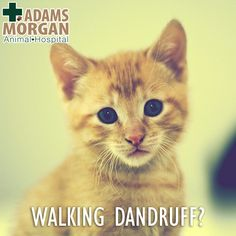 Walking dandruff?! It's a real thing, and it can drive your cat crazy! Find out more here and then schedule their next checkup.