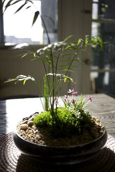 Tabletop indoor moss garden made by designer Kim Hughes - Homes and Gardens - Garden Ikebana, Air Plants, Garden Plants, Indoor Plants, Container Gardening, Gardening Tips, Indoor Gardening, Organic Gardening, Dish Garden