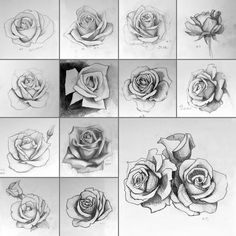 Rose Challenge by natalinanize.deviantart.com on @DeviantArt