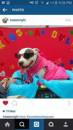 ADOPTED01/21/16--Meet Star, a Petfinder adoptable Pit Bull Terrier Dog | Houston, TX | Meet Star! This girl oozes charisma and keeps everyone entertained.Star is very sweet and...