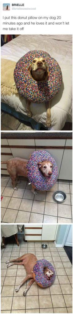Happy as a dog in a donut. This is so cute!
