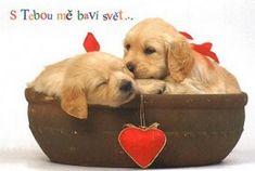 Labrador Retriever, Feelings, Funny, Dogs, Animals, People, Photography, Lava, Kawaii