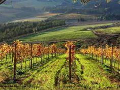 Hemel en Aarde Valley Cape Town, Good Times, South Africa, Beautiful Homes, Vineyard, Scene, Happiness, African, Outdoor